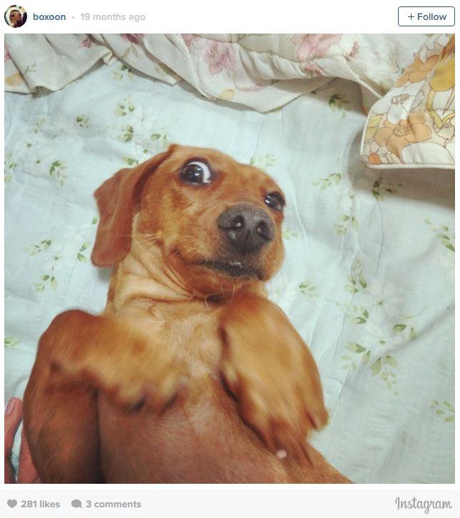 Ngắm những chú cún là thiên tài selfie siêu dễ thương - Ảnh 3.