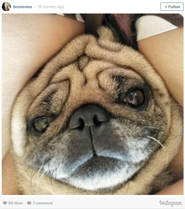 Ngắm những chú cún là thiên tài selfie siêu dễ thương - Ảnh 6.