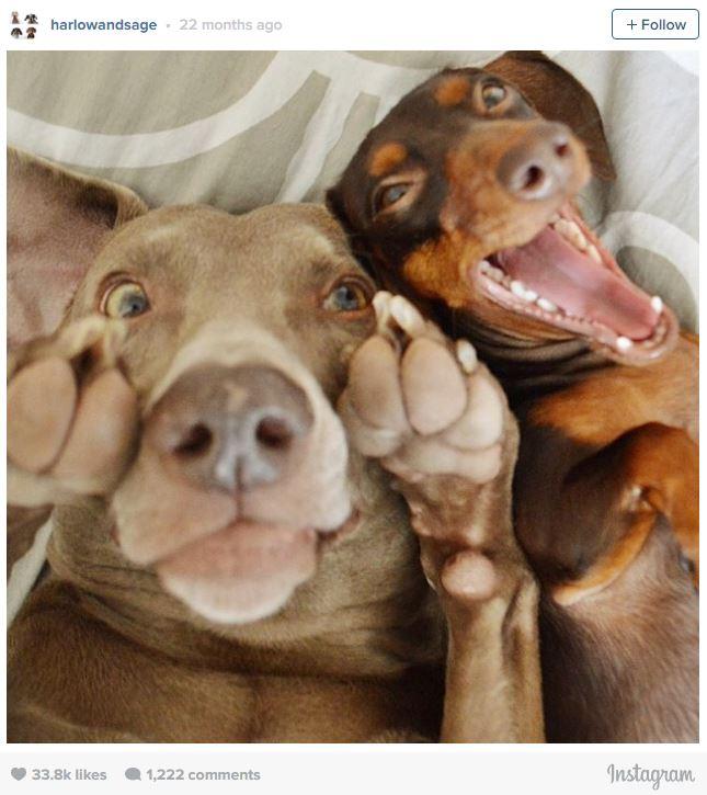 Ngắm những chú cún là thiên tài selfie siêu dễ thương - Ảnh 9.