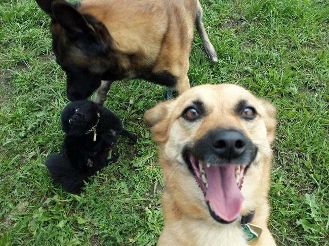 Ngắm những chú cún là thiên tài selfie siêu dễ thương - Ảnh 1.
