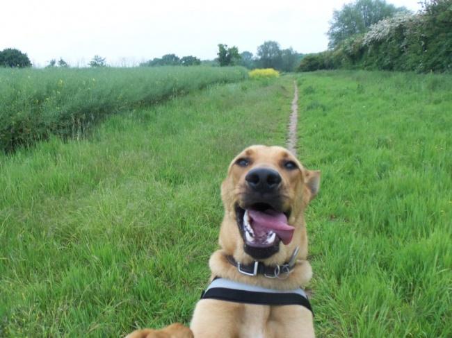 Ngắm những chú cún là thiên tài selfie siêu dễ thương - Ảnh 8.
