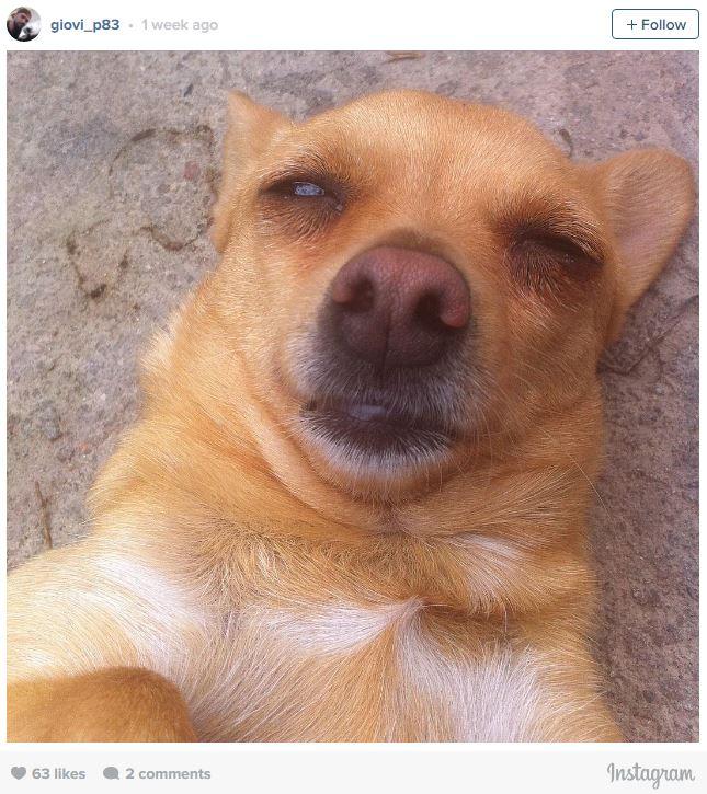 Ngắm những chú cún là thiên tài selfie siêu dễ thương - Ảnh 4.