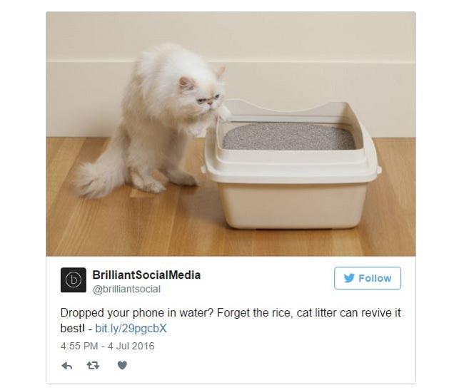 Gạo không hiệu quả, hãy dùng cát vệ sinh mèo để cứu điện thoại rơi nước - Ảnh 3.
