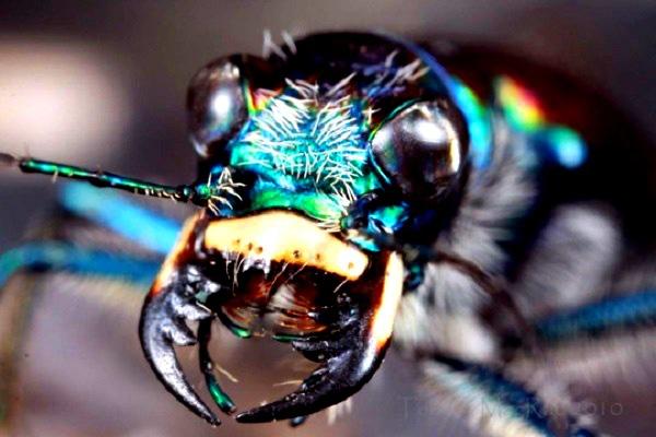"""""""Vẻ đẹp"""" hiếm có của các loài bọ trong tự nhiên 9"""