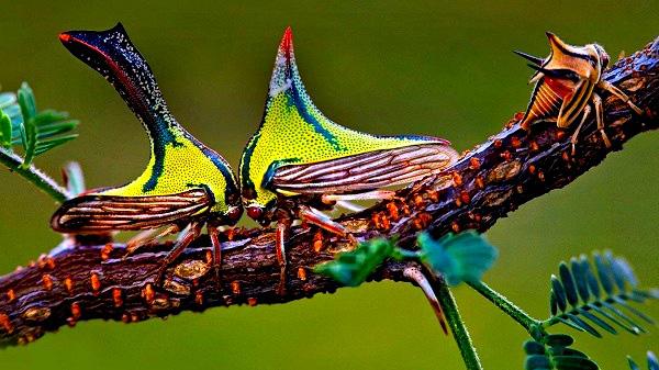 """""""Vẻ đẹp"""" hiếm có của các loài bọ trong tự nhiên 11"""