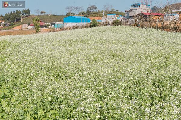 Lên Mộc Châu, ngủ nhà container đầy sắc màu giữa rừng mận trắng, cải vàng - Ảnh 2.