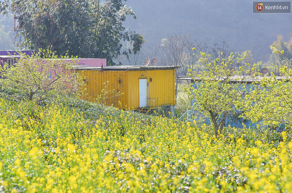Lên Mộc Châu, ngủ nhà container đầy sắc màu giữa rừng mận trắng, cải vàng - Ảnh 10.