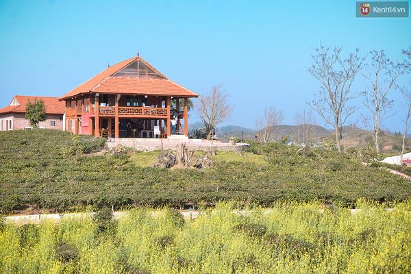 Lên Mộc Châu, ngủ nhà container đầy sắc màu giữa rừng mận trắng, cải vàng - Ảnh 14.