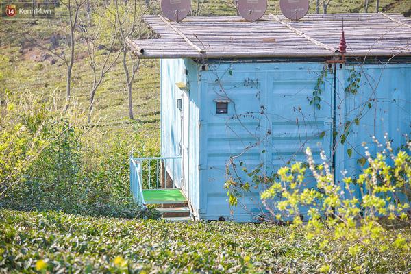 Lên Mộc Châu, ngủ nhà container đầy sắc màu giữa rừng mận trắng, cải vàng - Ảnh 12.