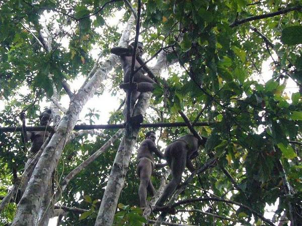 Bộ tộc sống trên cây duy nhất ở Trái đất 6