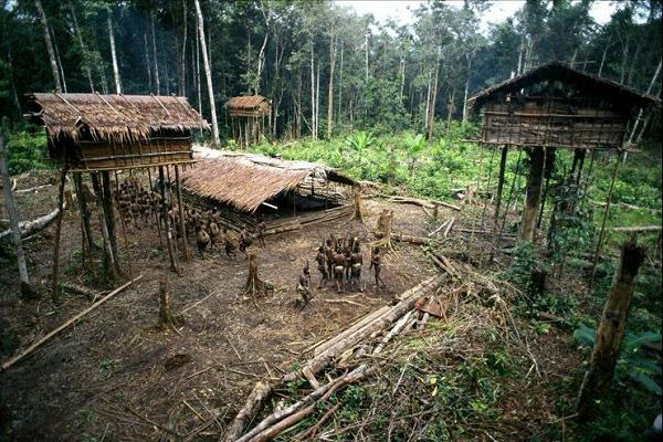 Bộ tộc sống trên cây duy nhất ở Trái đất 9