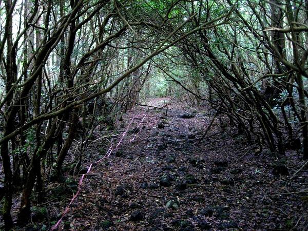 Giải mã bí ẩn lạnh gáy trong khu rừng tự sát 1