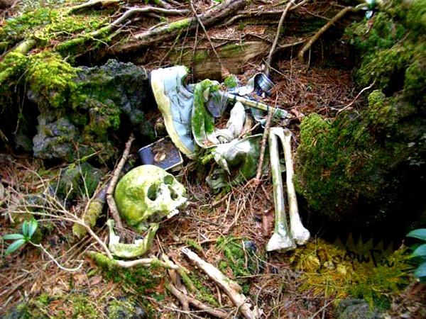 Giải mã bí ẩn lạnh gáy trong khu rừng tự sát 9