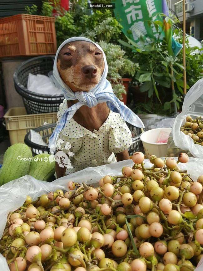 Không liên quan nhưng đây đích thị là cô chó bán hoa quả đáng yêu nhất quả đất - Ảnh 2.