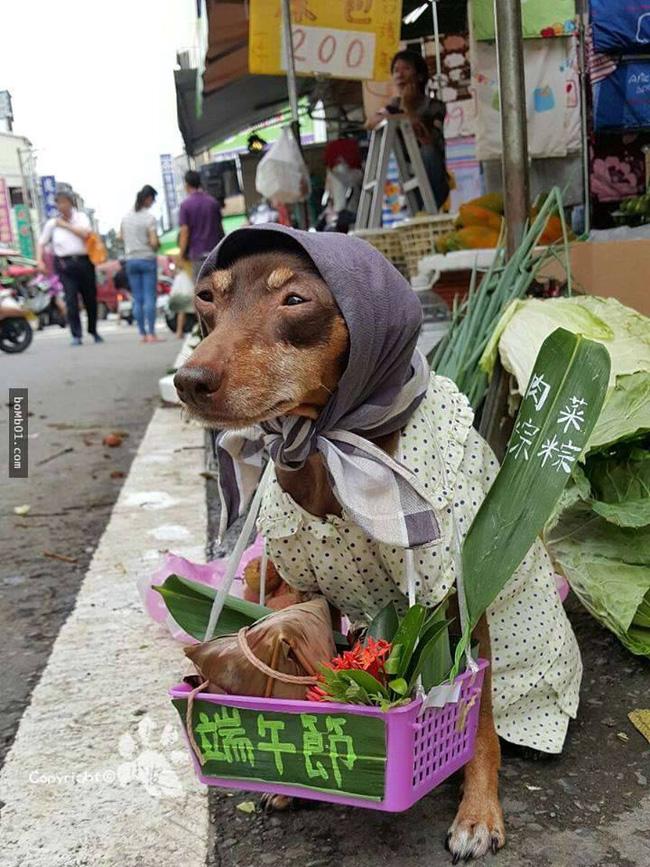 Không liên quan nhưng đây đích thị là cô chó bán hoa quả đáng yêu nhất quả đất - Ảnh 3.