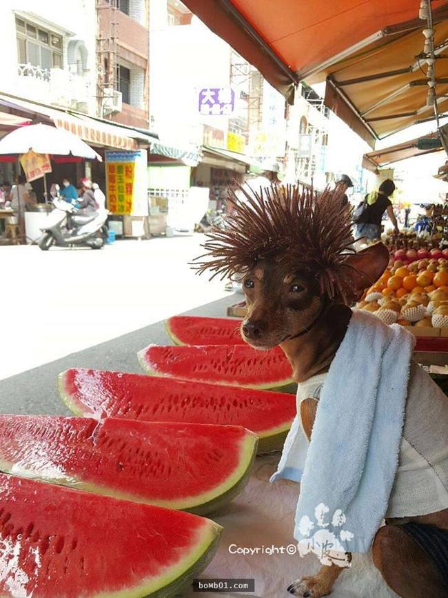 Không liên quan nhưng đây đích thị là cô chó bán hoa quả đáng yêu nhất quả đất - Ảnh 4.