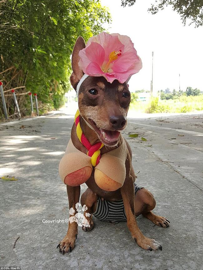 Không liên quan nhưng đây đích thị là cô chó bán hoa quả đáng yêu nhất quả đất - Ảnh 5.