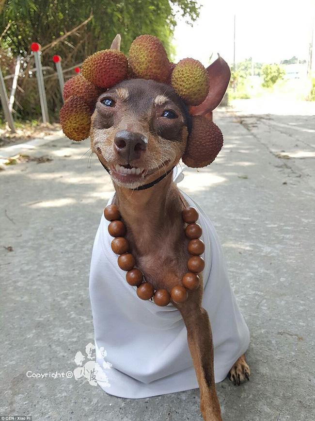 Không liên quan nhưng đây đích thị là cô chó bán hoa quả đáng yêu nhất quả đất - Ảnh 6.