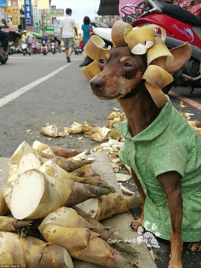 Không liên quan nhưng đây đích thị là cô chó bán hoa quả đáng yêu nhất quả đất - Ảnh 8.