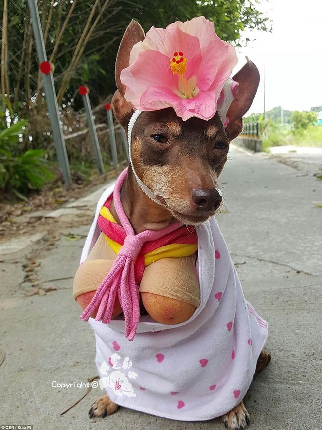 Không liên quan nhưng đây đích thị là cô chó bán hoa quả đáng yêu nhất quả đất - Ảnh 9.