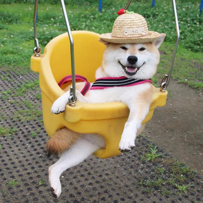 50 sắc thái đáng yêu của chú chó Shiba Inu khi đi chơi công viên - Ảnh 10.