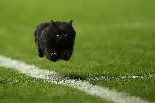 Chú mèo đen đủi phi thân qua sân bị các thánh Photoshop túm gọn - Ảnh 1.