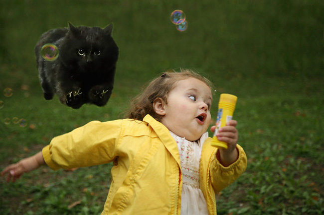 Chú mèo đen đủi phi thân qua sân bị các thánh Photoshop túm gọn - Ảnh 10.