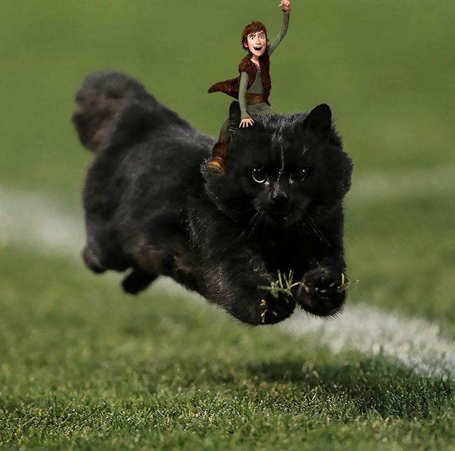 Chú mèo đen đủi phi thân qua sân bị các thánh Photoshop túm gọn - Ảnh 11.