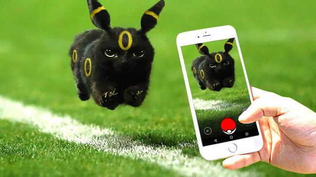 Chú mèo đen đủi phi thân qua sân bị các thánh Photoshop túm gọn - Ảnh 2.