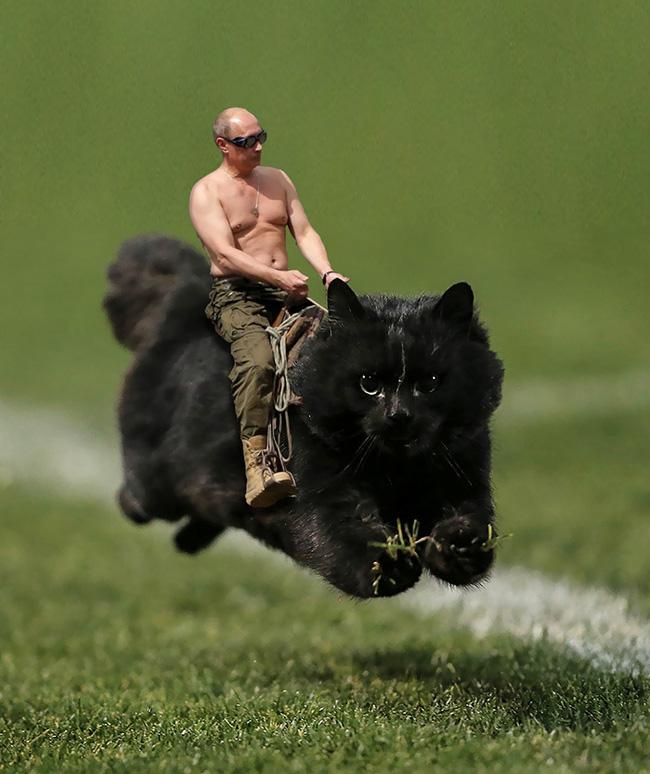 Chú mèo đen đủi phi thân qua sân bị các thánh Photoshop túm gọn - Ảnh 3.