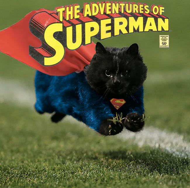 Chú mèo đen đủi phi thân qua sân bị các thánh Photoshop túm gọn - Ảnh 7.
