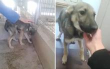 Chú chó khóc thảm thiết khi lần đầu được vuốt ve giờ đã ra sao?