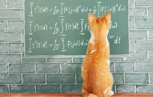 Lũ mèo! Hóa ra chúng nó còn biết cả vật lý các chế ạ