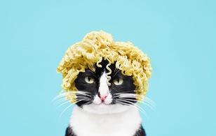 Album ảnh nghệ thuật của hotgirl mèo nổi tiếng Instagram